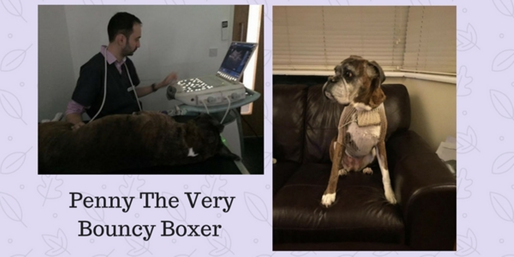 Penny The Very Bouncy Boxer2